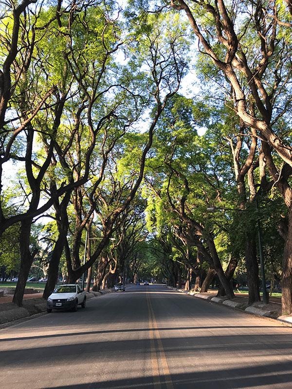 Allee in Mendoza Argentinien