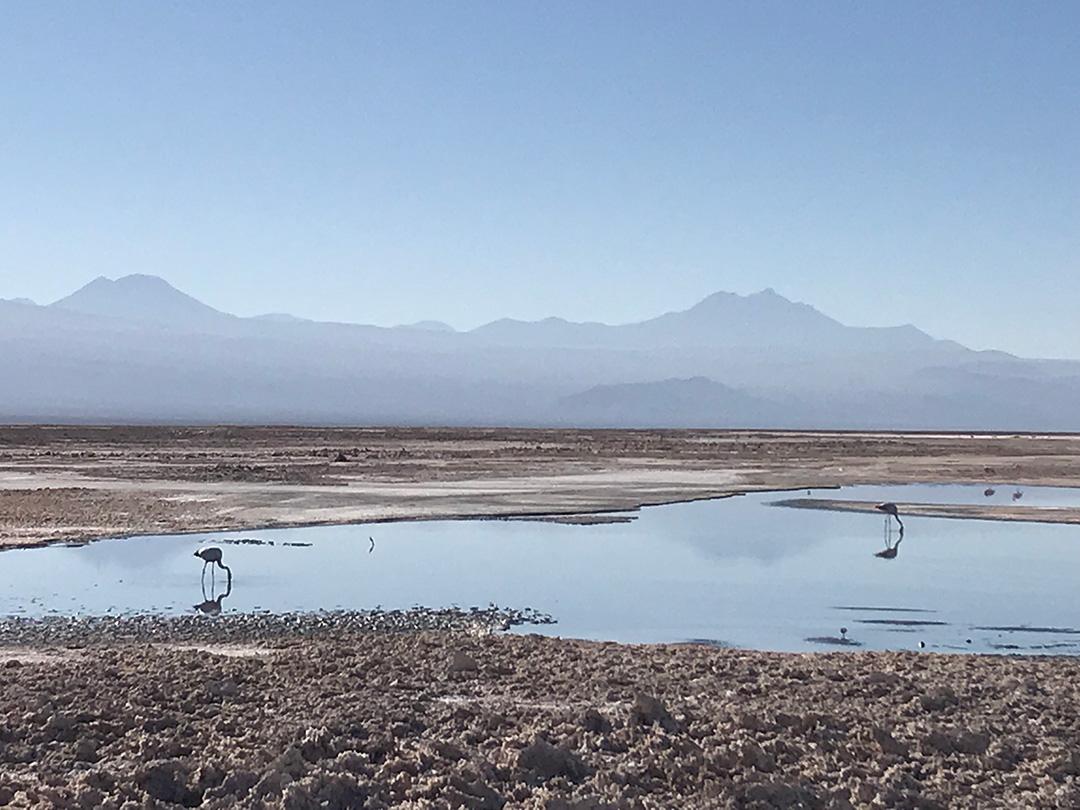 Flamingos in der Salar de Atacama Chile
